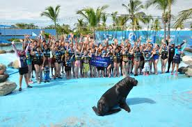 Six Flags Dolphin Swim Dolphin Discovery Bucket List 2014 Swim With Dolphins With