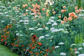 Summer Flower Garden Ideas - a spectacular summer planting idea with dahlia zinnia rudbeckia