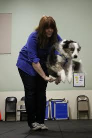Canine Creature Comforts A Dog U0027s Life
