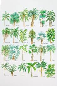 different types of trees different types palm trees wedding cake