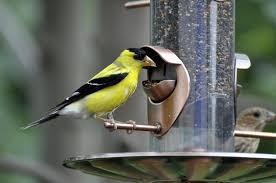 choosing a bird feeder audubon new york