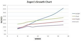 australian shepherd growth chart gsd weight chart german shepherd growth chart puppy growth rate