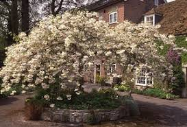10 of the best trees for small gardens and style the