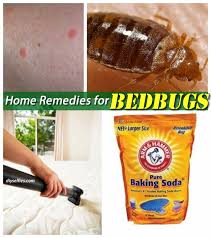 how can you get rid of bed bugs home remedies to get rid of bed bugs diyselfies remedies