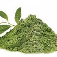 Teh Hijau Serbuk teh hijau bubuk pakaroti