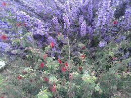 native sonoran desert plants desert plants u2013 tjs garden
