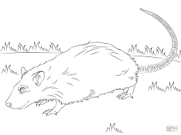 rat coloring pages downloads online coloring page 1937