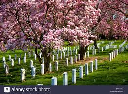 Arlington National Cemetery Map Blooms Arlington National Cemetery Stock Photos U0026 Blooms Arlington