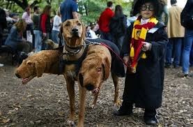 Dog Costumes 10 Halloween Costume Ideas For Your Dog
