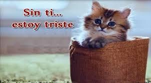 imagenes de gatitos sin frases de te extraño en imagen de tiernos gatitos para regalar a tu pareja