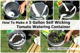 wicking tomato watering instructables com jpg
