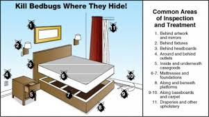 light bed bug infestation bed bugs pestrid products
