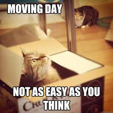 Moving Meme - moving day not as easy as you think cats wife quickmeme