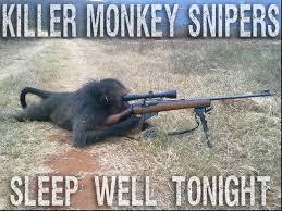 Sexy Monkey Meme - that s crazy talk 18 funny pics memes team jimmy joe