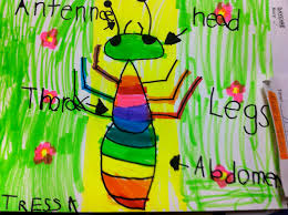 drawing and labeling an insect fairy dust teaching