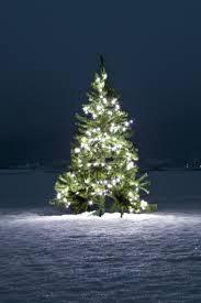 Downswept Slim Christmas Tree by Best 25 Douglas Fir Christmas Tree Ideas On Pinterest Pine Tree