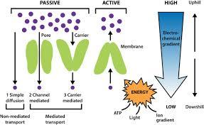 biological membranes essays in biochemistry