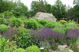 marijke u0027s perennial gardens plus