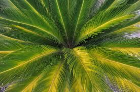 Palm Tree Wallpaper Palm Green Tree Nature Wallpaper 4288x2848 443800 Wallpaperup