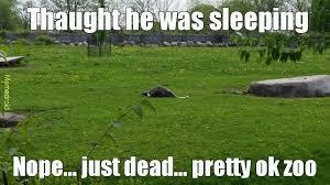 Ostrich Meme - dead ostrich meme by mosindrew3 memedroid