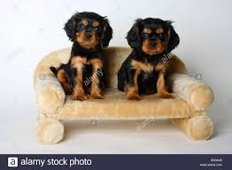 Sofa King Tired by Tan Couch Stock Photos U0026 Tan Couch Stock Images Alamy