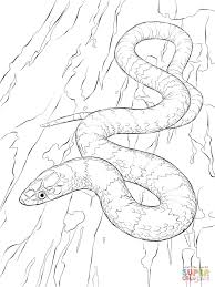 scarlet kingsnake download coloring pages animal photos of