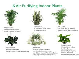 best plants for air quality which plant do you need in your indoor space plantscapers good good