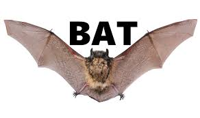 bat sounds sound effect at night in a cave walls fx halloween