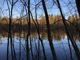 free images tree water nature forest sunset sunlight