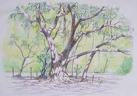 outdoor sketches colour pencil www rahuldeshpandefineart com