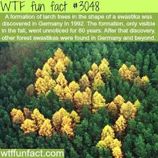 892 best facts images on facts
