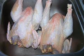 Backyard Chicken Processing by 1st Time Processing Totally By Myself Carcass Photo Backyard