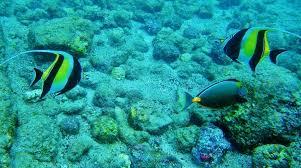 Hawaii snorkeling images Best snorkeling in hawaii is on the big island jpg