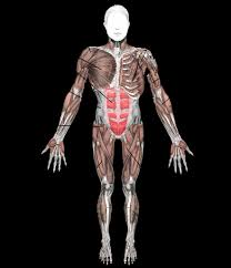 10 major muscles of the human body create your own room games