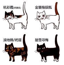 馗rire une recette de cuisine les 21 meilleures images du tableau cats sur chats