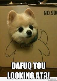 Hilarious Dog Memes - dafuq you looking at scumbag cute dog quickmeme