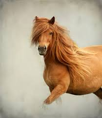 Nice Hourse 81 Images About Wild Horse Lover On We Heart It See More About
