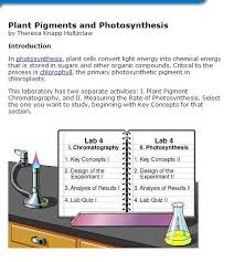 Lab Bench Photosynthesis 79 Best Photosynthesis U0026 Cellular Respiration Images On Pinterest