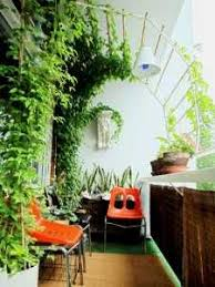 home interior plants best plants for decorating home contemporary liltigertoo