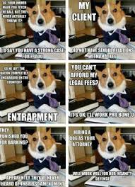 Lawyer Dog Meme - hilarious lawyer dog memes you need to see attorney client