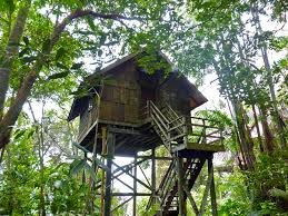file tree house jpg file tree house 15495381897 jpg wikimedia commons