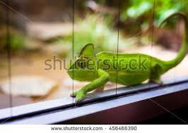 reptile terrarium stock images royalty free images u0026 vectors