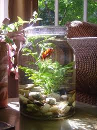 Betta Fish Vase With Bamboo 83 Best Aquariums Images On Pinterest Fish Aquariums Aquarium