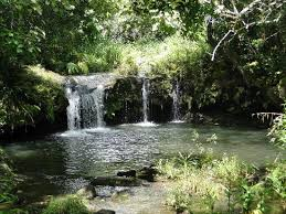 Hawaii forest images Waterfall picture of hawaii forest and trail kailua kona jpg
