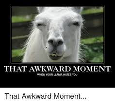 Llama Meme - that awkward moment when your llama hates you that awkward moment