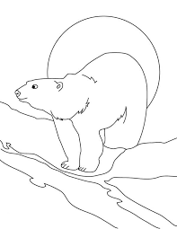 awesome drawing arctic animals polar bear colouring