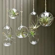 best 25 air plant display ideas on air plants air
