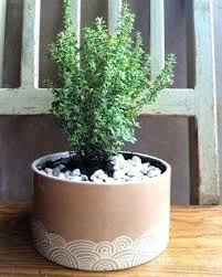 large indoor ceramic planters u2013 instavite me