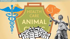 a veterinarian u0027s education video u0026 lesson transcript study com