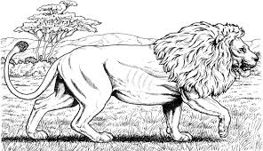 mewarnai gambar hewan singa si raja hutan untuk belajar anak